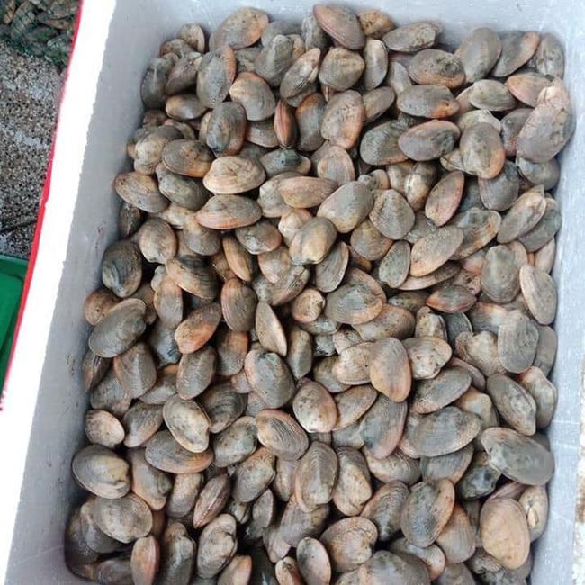 Thực hư ngao hai cùi Vân Đồn đang được bán giá rẻ giật mình, chỉ 65 ngàn đồng/kg rao khắp chợ mạng - Ảnh 4.