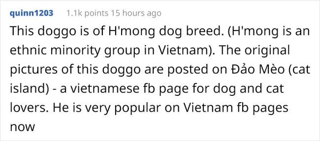 Cộng đồng mạng toàn thế giới ngưỡng mộ và dành lời khen không ngớt đến chú chó đang gây bão tại Việt Nam - gần 50K lượt thích sau 5 ngày lập page - Ảnh 3.