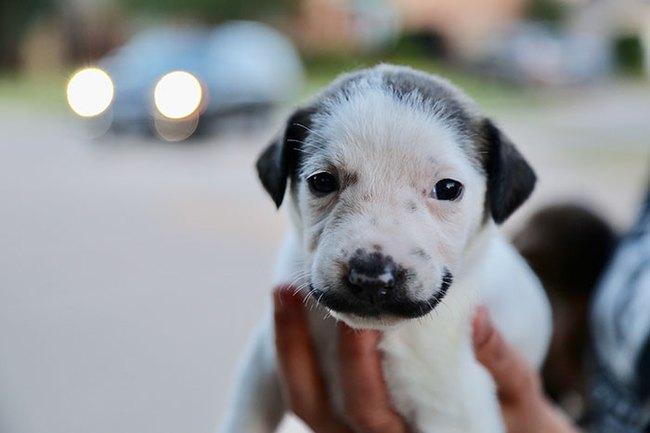 """Vừa sinh ra đã mang """"gương mặt phụ huynh"""", chú chó khiến dân tình thích thú - Ảnh 1."""
