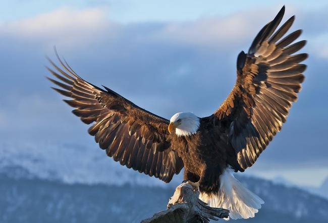 Chim ưng đổi 150 ngày thống khổ lấy 30 năm tuổi thọ và bài học đắt giá cho những tâm hồn nhàn hạ nơi công sở - Ảnh 3.