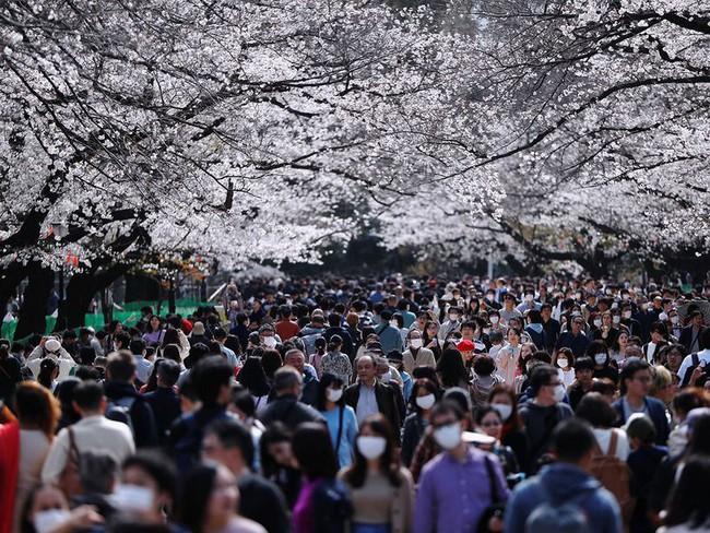 Bất chấp cảnh báo về dịch Covid-19, nhiều người ở Nhật vẫn đổ xô đi ngắm hoa anh đào và xem sự kiện tại sân vận động mà không đeo khẩu trang - Ảnh 1.