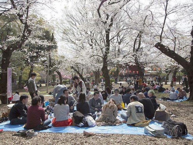 Bất chấp cảnh báo về dịch Covid-19, nhiều người ở Nhật vẫn đổ xô đi ngắm hoa anh đào và xem sự kiện tại sân vận động mà không đeo khẩu trang - Ảnh 2.