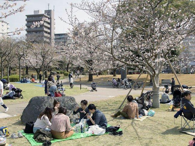 Bất chấp cảnh báo về dịch Covid-19, nhiều người ở Nhật vẫn đổ xô đi ngắm hoa anh đào và xem sự kiện tại sân vận động mà không đeo khẩu trang - Ảnh 4.