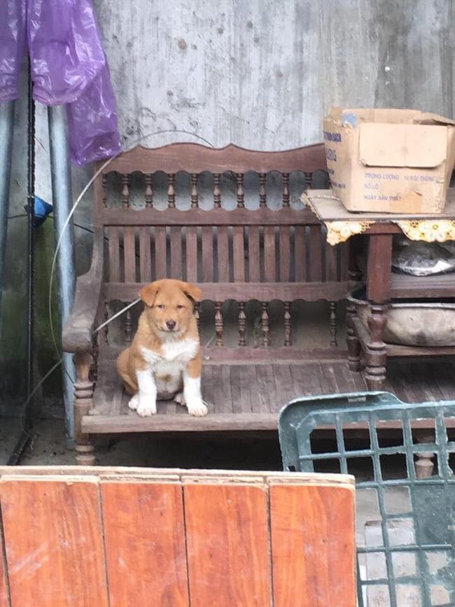 """Dân mạng ngỡ ngàng phát hiện chú chó Dúi idol có em sinh đôi, thần thái giống hệt Dúi chỉ khác mỗi màu lông và mắt không bị """"lé"""" - Ảnh 6."""