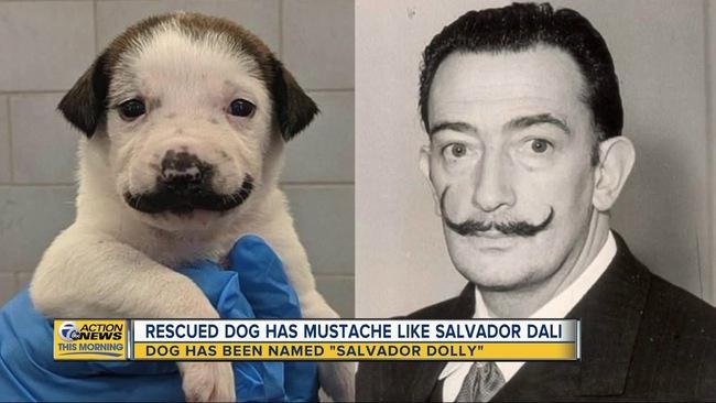 """Vừa sinh ra đã mang """"gương mặt phụ huynh"""", chú chó nổi như cồn trên MXH với bộ ria mép hài kịch - Ảnh 3."""