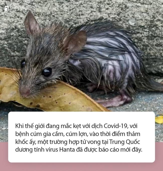 Một người đàn ông tử vong trên xe buýt tại Trung Quốc dương tính loại virus lây nhiễm từ chuột sang người - Ảnh 1.