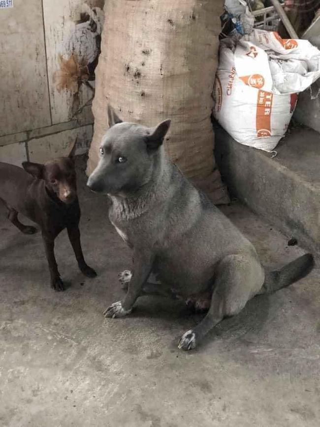Lộ diện mẹ đẻ của chú chó Nguyễn Văn Dúi khiến dân mạng thắc mắc sao mẹ chân dài như hoa hậu mà con trai thì... vừa lé vừa lùn - Ảnh 1.