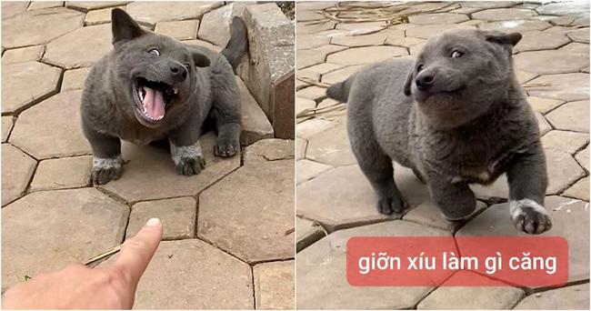 Lộ diện mẹ đẻ của chú chó Nguyễn Văn Dúi khiến dân mạng thắc mắc sao mẹ chân dài như hoa hậu mà con trai thì... vừa lé vừa lùn - Ảnh 5.