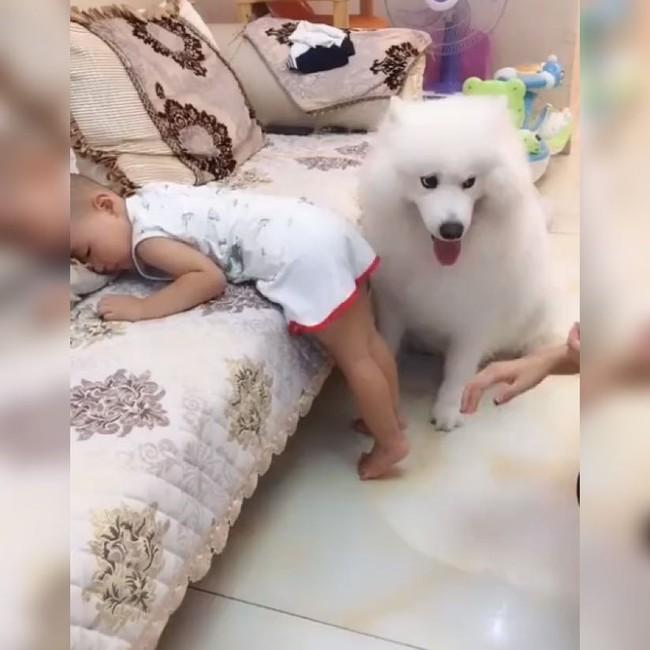 Thấy bé trai bị mẹ đưa tay ra đánh, chú chó cưng đã làm 1 việc khiến ai thấy cũng ấm lòng - Ảnh 1.