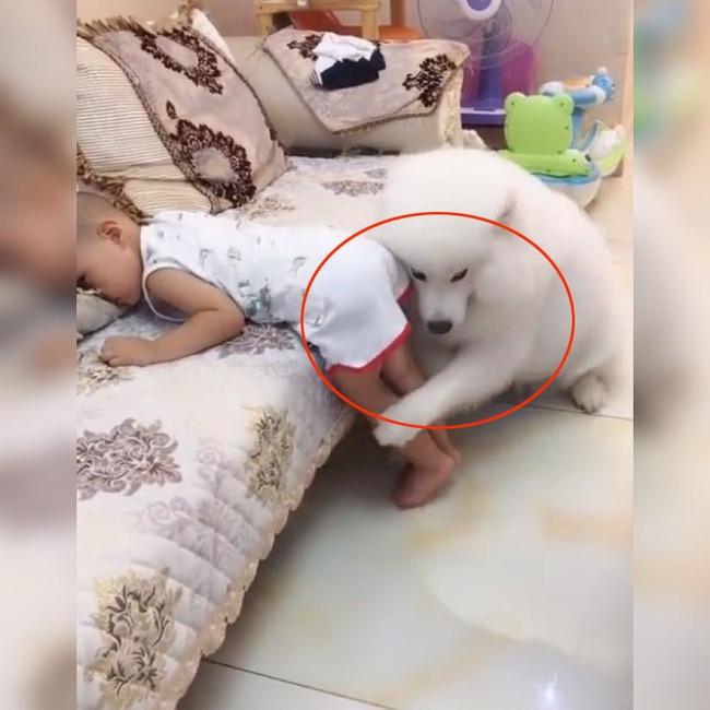 Thấy bé trai bị mẹ đưa tay ra đánh, chú chó cưng đã làm 1 việc khiến ai thấy cũng ấm lòng - Ảnh 4.