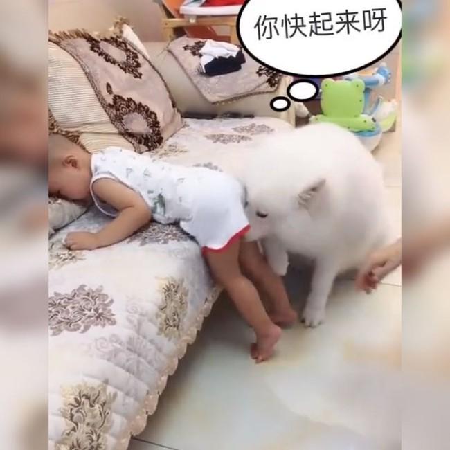 Thấy bé trai bị mẹ đưa tay ra đánh, chú chó cưng đã làm 1 việc khiến ai thấy cũng ấm lòng - Ảnh 5.