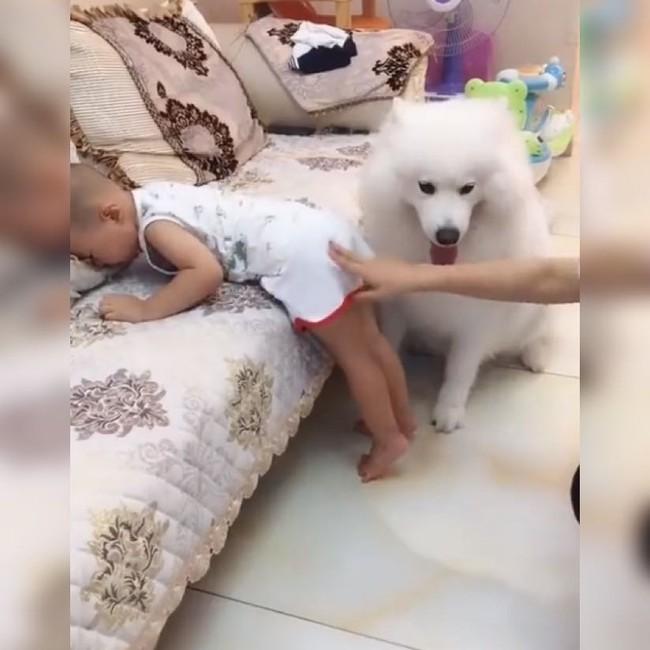 Thấy bé trai bị mẹ đưa tay ra đánh, chú chó cưng đã làm 1 việc khiến ai thấy cũng ấm lòng - Ảnh 2.