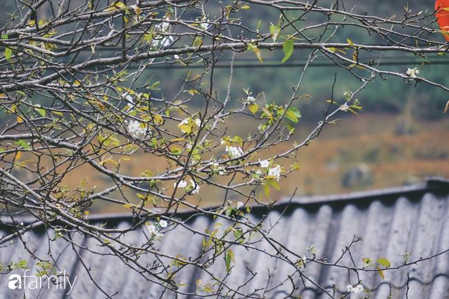 Hà Giang tháng 3 đẹp mê hồn trong mắt cô gái trẻ xứ Thanh, thật khó tin khi 4 loài hoa núi rừng đủ sắc màu cùng nở một lúc - Ảnh 5.