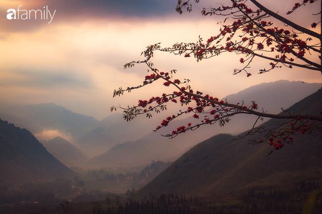 Hà Giang tháng 3 đẹp mê hồn trong mắt cô gái trẻ xứ Thanh, thật khó tin khi 4 loài hoa núi rừng đủ sắc màu cùng nở một lúc - Ảnh 8.