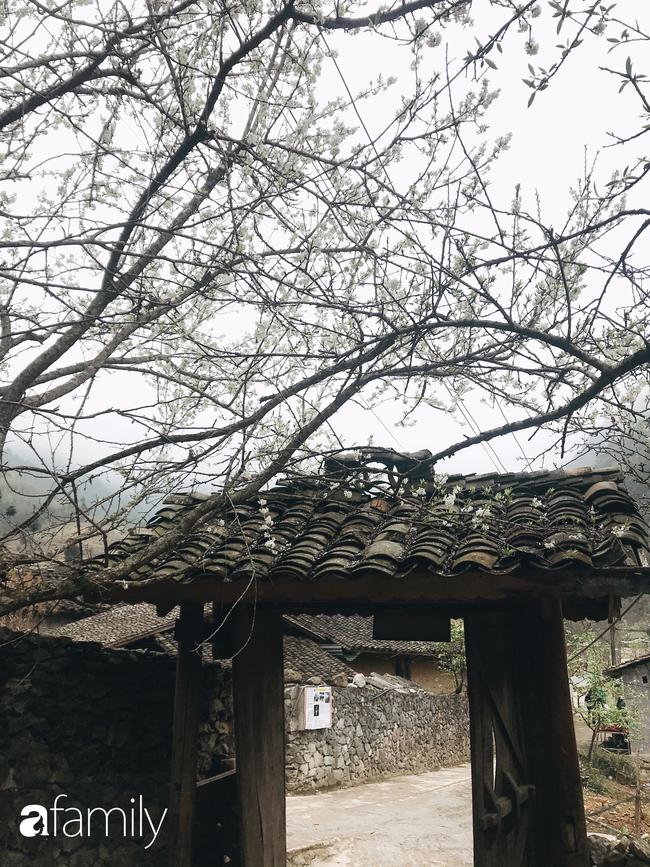 Hà Giang tháng 3 đẹp mê hồn trong mắt cô gái trẻ xứ Thanh, thật khó tin khi 4 loài hoa núi rừng đủ sắc màu cùng nở một lúc - Ảnh 17.