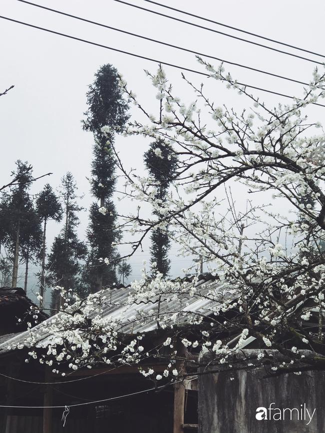 Hà Giang tháng 3 đẹp mê hồn trong mắt cô gái trẻ xứ Thanh, thật khó tin khi 4 loài hoa núi rừng đủ sắc màu cùng nở một lúc - Ảnh 18.