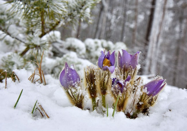 Khi loài người vẫn đang hối hả chống lại bệnh tật, hơi thở của mùa xuân đã từ từ len lỏi đến từng ngõ ngách khắp thế giới - Ảnh 2.