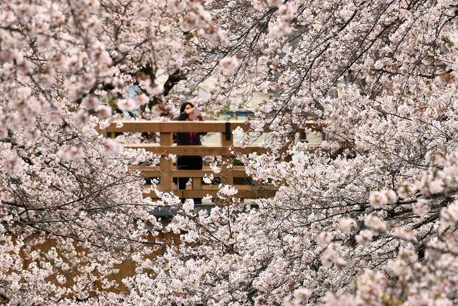 Khi loài người vẫn đang hối hả chống lại bệnh tật, hơi thở của mùa xuân đã từ từ len lỏi đến từng ngõ ngách khắp thế giới - Ảnh 12.