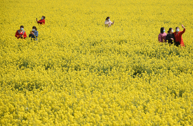 Khi loài người vẫn đang hối hả chống lại bệnh tật, hơi thở của mùa xuân đã từ từ len lỏi đến từng ngõ ngách khắp thế giới - Ảnh 15.