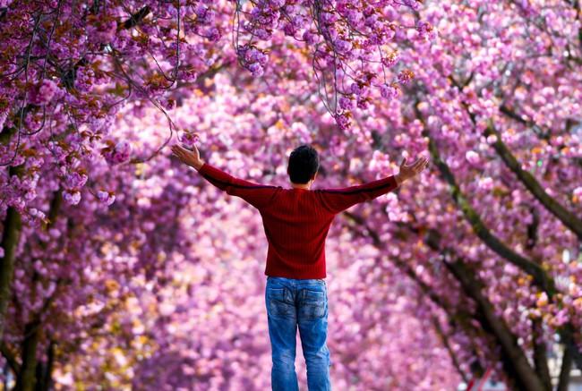 Khi loài người vẫn đang hối hả chống lại bệnh tật, hơi thở của mùa xuân đã từ từ len lỏi đến từng ngõ ngách khắp thế giới - Ảnh 1.