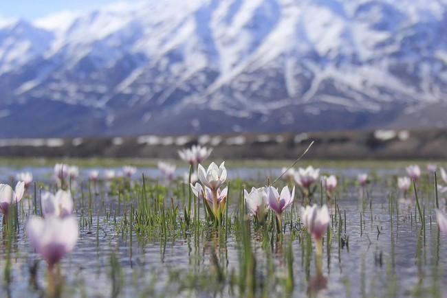 Khi loài người vẫn đang hối hả chống lại bệnh tật, hơi thở của mùa xuân đã từ từ len lỏi đến từng ngõ ngách khắp thế giới - Ảnh 17.