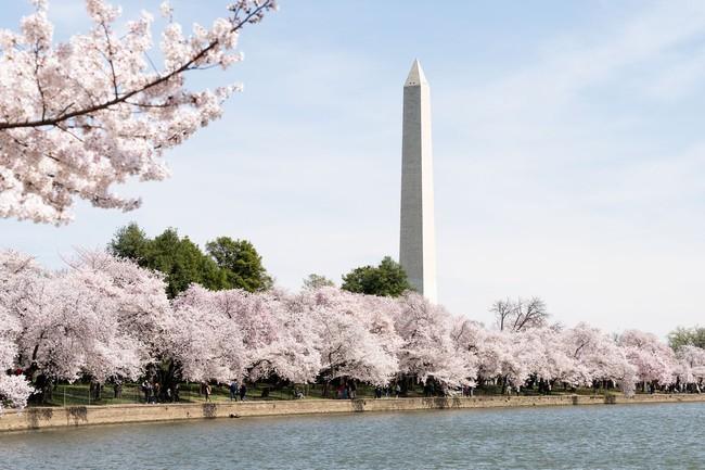 Khi loài người vẫn đang hối hả chống lại bệnh tật, hơi thở của mùa xuân đã từ từ len lỏi đến từng ngõ ngách khắp thế giới - Ảnh 19.