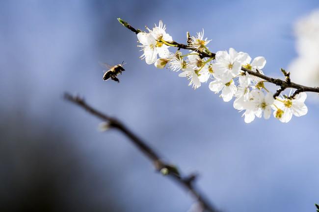 Khi loài người vẫn đang hối hả chống lại bệnh tật, hơi thở của mùa xuân đã từ từ len lỏi đến từng ngõ ngách khắp thế giới - Ảnh 20.