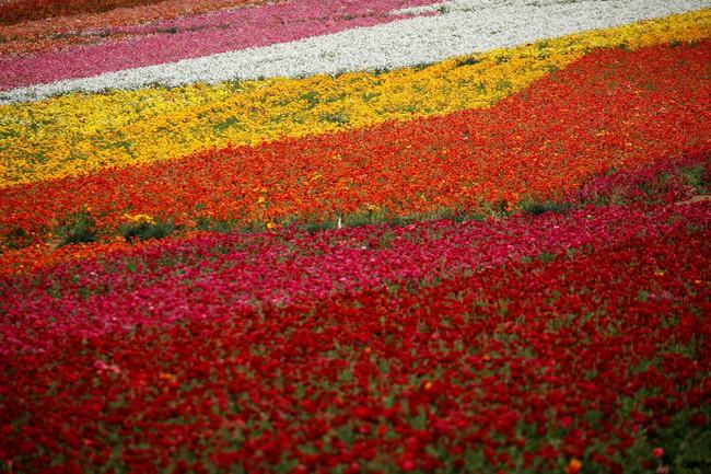 Khi loài người vẫn đang hối hả chống lại bệnh tật, hơi thở của mùa xuân đã từ từ len lỏi đến từng ngõ ngách khắp thế giới - Ảnh 22.