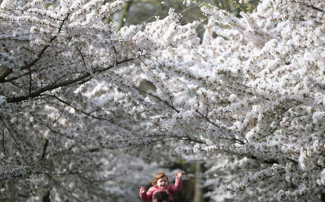 Khi loài người vẫn đang hối hả chống lại bệnh tật, hơi thở của mùa xuân đã từ từ len lỏi đến từng ngõ ngách khắp thế giới - Ảnh 24.