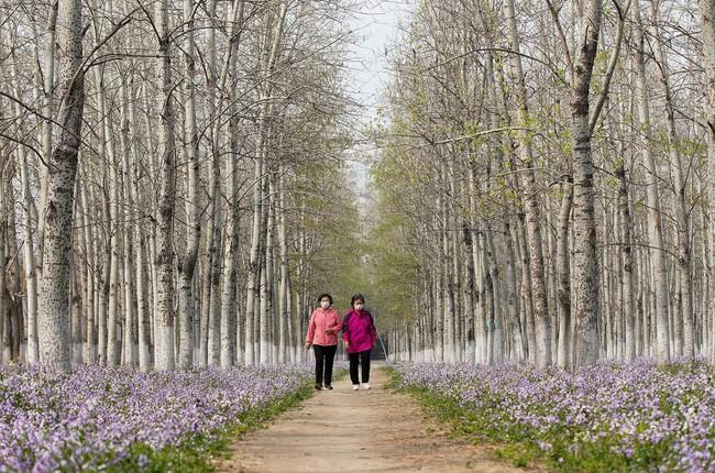 Khi loài người vẫn đang hối hả chống lại bệnh tật, hơi thở của mùa xuân đã từ từ len lỏi đến từng ngõ ngách khắp thế giới - Ảnh 26.