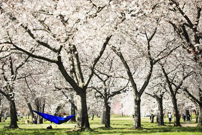 Khi loài người vẫn đang hối hả chống lại bệnh tật, hơi thở của mùa xuân đã từ từ len lỏi đến từng ngõ ngách khắp thế giới - Ảnh 4.