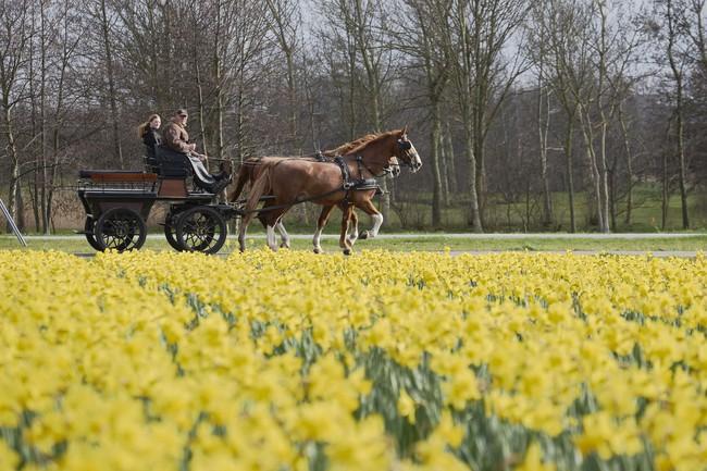 Khi loài người vẫn đang hối hả chống lại bệnh tật, hơi thở của mùa xuân đã từ từ len lỏi đến từng ngõ ngách khắp thế giới - Ảnh 6.
