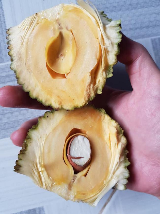 Đến mít cũng tuân thủ lệnh cách ly, quả bé xíu bằng bàn tay, vẻn vẹn duy nhất 1 hạt, 1 múi đến hài - Ảnh 2.