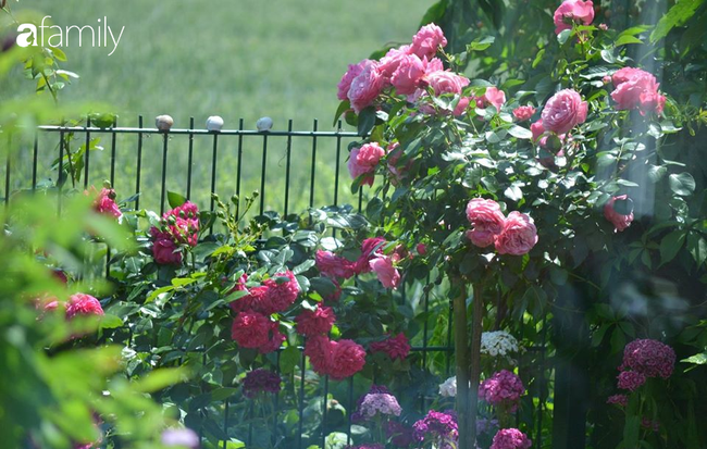 Ngắm ngôi nhà nằm cạnh dòng suối róc rách, trước mặt là cánh đồng và khu vườn đầy hoa trái khoe sắc quanh năm   - Ảnh 8.