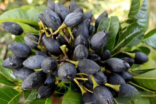 """Có loại quả trông đen nhẻm, xấu xí nhưng ai thấy cũng muốn mua ngay: Ăn 1 lần là """"nhớ suốt đời"""", trị được 15 loại bệnh vô cùng thần kỳ - Ảnh 1."""