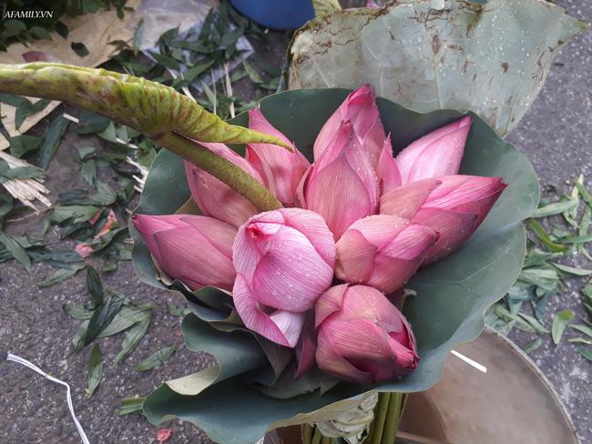 Tháng 5, sen hồng, sen trắng đầu mùa bán đầy các chợ, giá chỉ 30-120 ngàn đồng/bó, bà nội trợ thi nhau mua về cắm vì vẻ đẹp tao nhã - Ảnh 7.