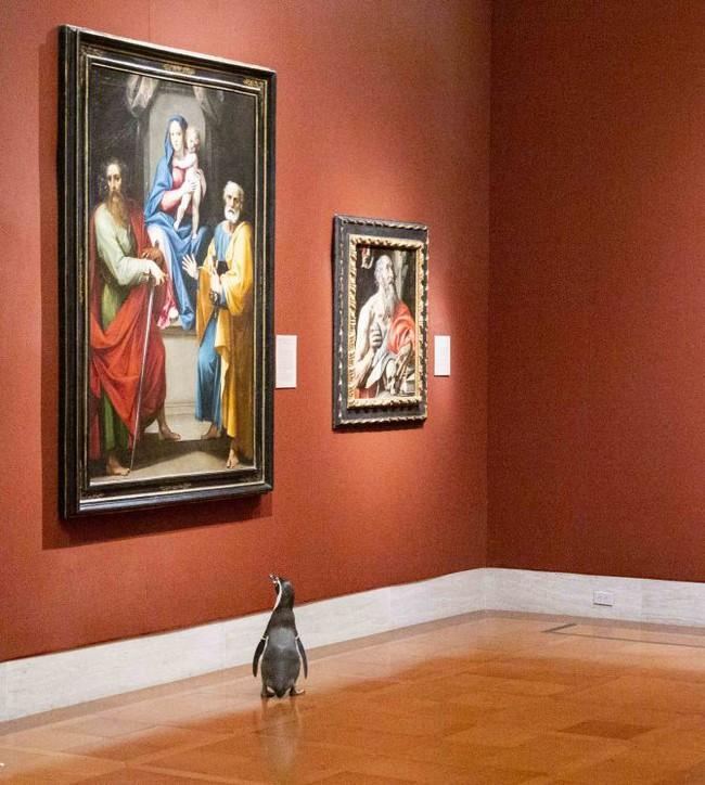 Ba chú chim cánh cụt được mời đến tham quan và thưởng thức nghệ thuật đỉnh cao trong bảo tàng Mỹ vào mùa cách ly - Ảnh 3.