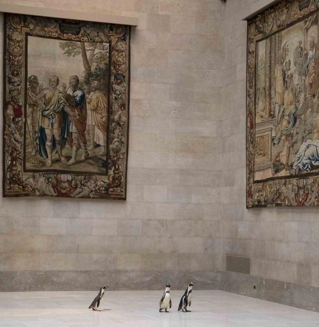 Ba chú chim cánh cụt được mời đến tham quan và thưởng thức nghệ thuật đỉnh cao trong bảo tàng Mỹ vào mùa cách ly - Ảnh 2.