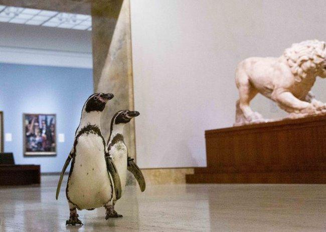 Ba chú chim cánh cụt được mời đến tham quan và thưởng thức nghệ thuật đỉnh cao trong bảo tàng Mỹ vào mùa cách ly - Ảnh 5.