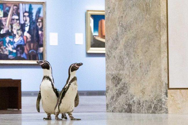 Ba chú chim cánh cụt được mời đến tham quan và thưởng thức nghệ thuật đỉnh cao trong bảo tàng Mỹ vào mùa cách ly - Ảnh 6.