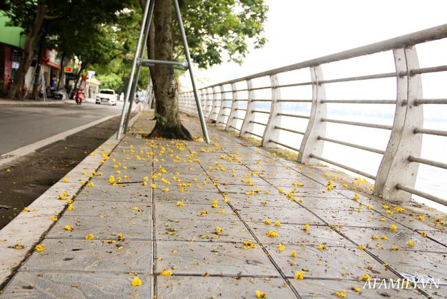 Muồng hoàng yến níu trải dọc bên bờ Hồ Tây, sắc vàng nhuộm nắng gợi nhớ những rung động của mùa hè năm tuổi đôi mươi ấy - Ảnh 8.