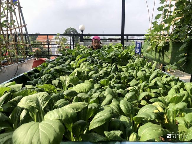 Doanh nhân Sài Gòn trồng cả vườn rau và hoa như trang trại rộng 300m² trên sân thượng cho vợ cùng 4 con được sống gần gũi với thiên nhiên - Ảnh 4.