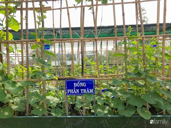 Doanh nhân Sài Gòn trồng cả vườn rau và hoa như trang trại rộng 300m² trên sân thượng cho vợ cùng 4 con được sống gần gũi với thiên nhiên - Ảnh 16.