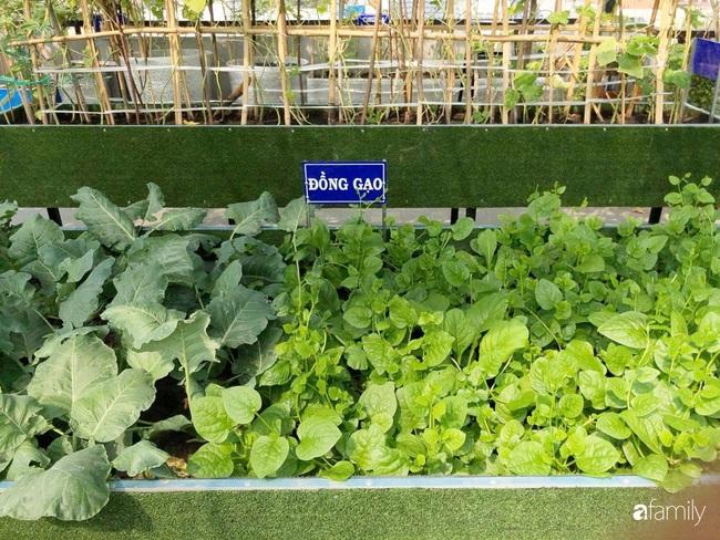 Doanh nhân Sài Gòn trồng cả vườn rau và hoa như trang trại rộng 300m² trên sân thượng cho vợ cùng 4 con được sống gần gũi với thiên nhiên - Ảnh 6.