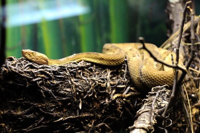 Hòn đảo cấm con người đặt chân đến bởi có hàng nghìn con rắn cực độc cùng những cái chết bí ẩn không lời giải đáp - Ảnh 2.