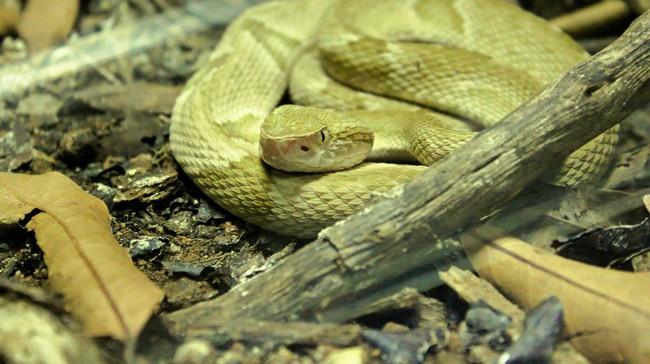 Hòn đảo cấm con người đặt chân đến bởi có hàng nghìn con rắn cực độc cùng những cái chết bí ẩn không lời giải đáp - Ảnh 4.