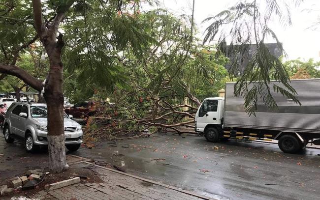TP.HCM: Cây phượng lại bật gốc đè xe tải sau cơn mưa lớn khiến nhiều người hú vía - Ảnh 1.