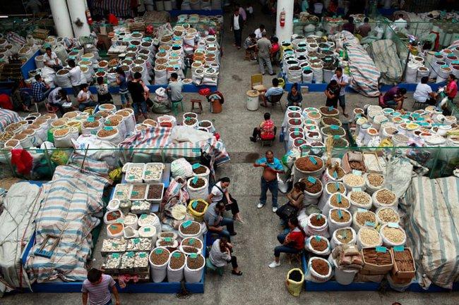Khi những người buôn bán động vật hoang dã lợi dụng y học cổ truyền Trung Quốc để trục lợi, khiến ngành này xấu đi trong mắt xã hội - Ảnh 4.