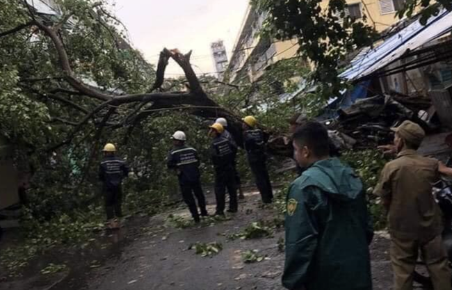 TP.HCM: Sau cơn mưa lớn kèm gió giật, nhiều cây xanh lại gãy đổ đè nhà dân, đè cả người đi đường - Ảnh 1.