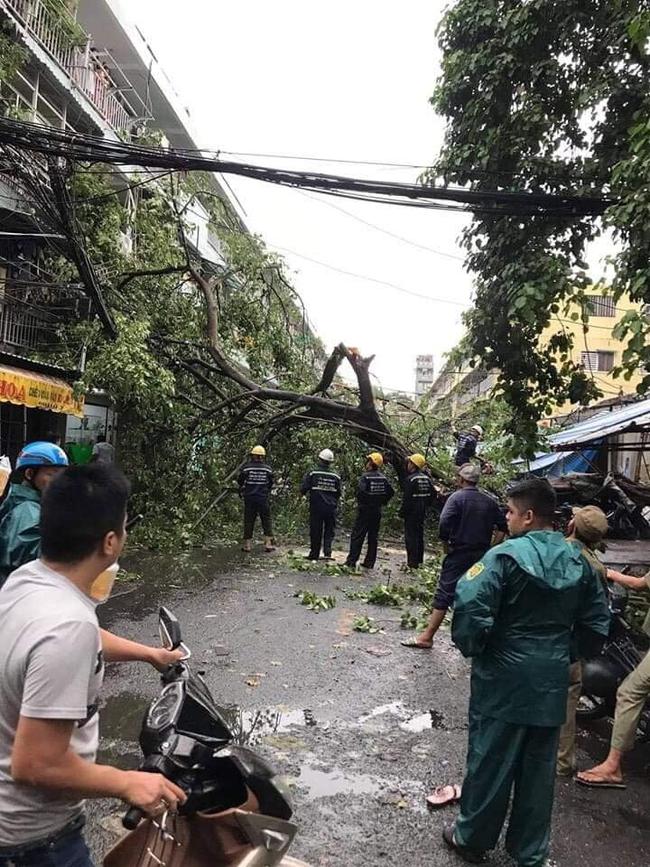 TP.HCM: Sau cơn mưa lớn kèm gió giật, nhiều cây xanh lại gãy đổ đè nhà dân, đè cả người đi đường - Ảnh 2.
